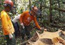 Moradores de reserva iniciam extração sustentável de madeira no Pará