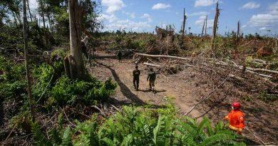 Desmatamento na Amazônia cresce 30% e Pará aparece em primeiro lugar