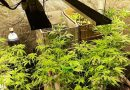 Mulher é presa suspeita de cultivar maconha dentro de casa