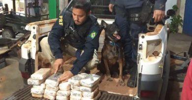 Cães farejadores encontram 20kg de cocaína dentro de veículo em Marabá